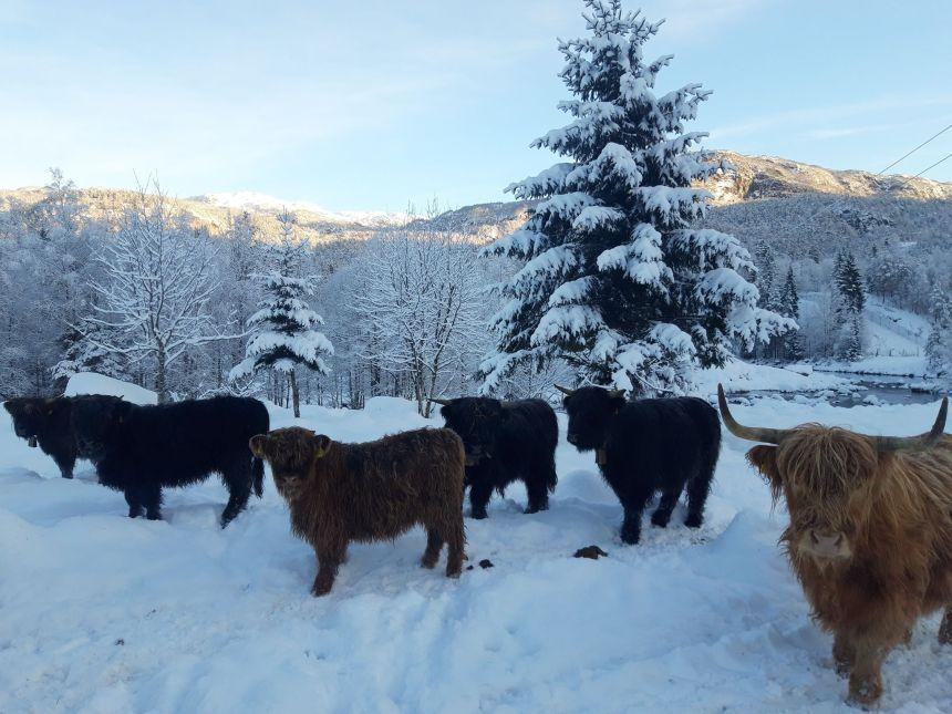 Dei elskar vinteren!