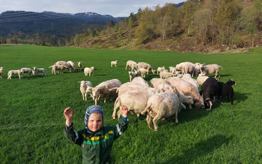 Første lamma kom til verden i April
